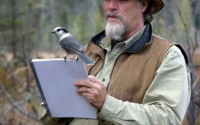 Bird Watching & Helping our Feathered Friends